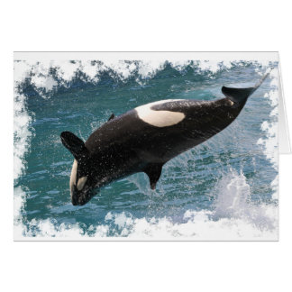 Killer whale jumping out of water card