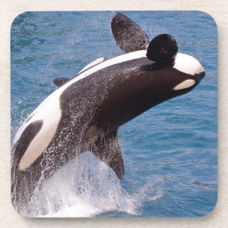 Killer whale jumping out of water coaster