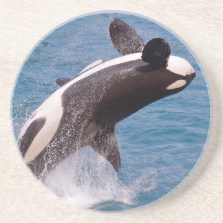 Killer whale jumping out of water drink coaster