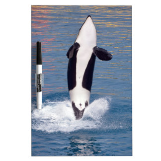 Killer whale jumping out of water dry erase board