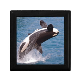 Killer whale jumping out of water jewelry box