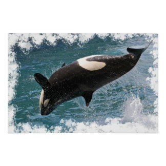 Killer whale jumping out of water poster