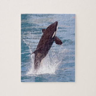 Killer whale jumping out of water puzzle