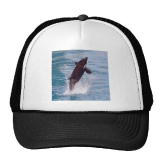Killer whale jumping out of water trucker hat