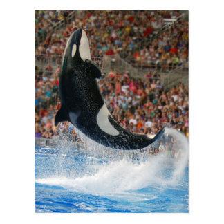 Killer whale jumping postcard