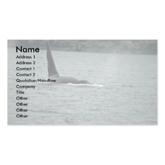 Killer Whale-large male swimming at surface Business Card Template