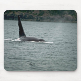 Killer Whale-large male swimming at surface Mouse Pad