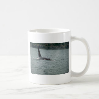 Killer Whale-large male swimming at surface Mugs