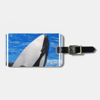 Killer Whale Tags For Luggage