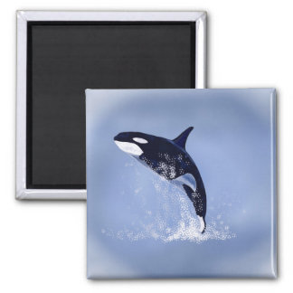 Killer Whale 2 Inch Square Magnet