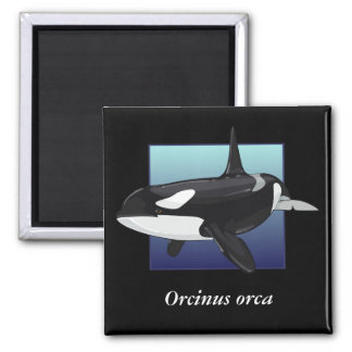 Killer Whale Magnet, Square 2 Inch Square Magnet