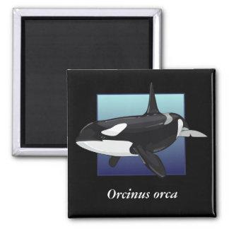 Killer Whale Magnet, Square Magnet