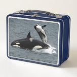 "Killer Whale Metal Lunch Box<br><div class=""desc"">A killer whale,  aka orca decorates this handy metal lunch box</div>"