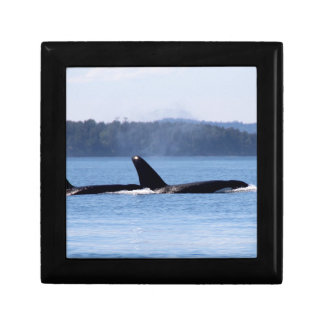 Killer Whale Mother and Son Gift Box