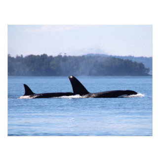 Killer Whale Mother and Son Letterhead