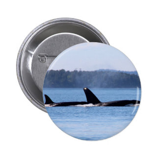 Killer Whale Mother and Son Pinback Button