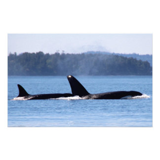 Killer Whale Mother and Son Stationery