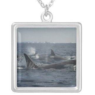 killer whale personalized necklace