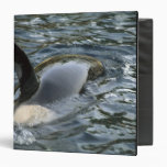 Killer Whale, Orca, Orcinus orca), adult 3 Ring Binder
