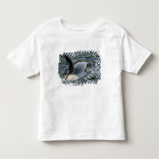 Killer Whale, Orca, Orcinus orca), adult T Shirt