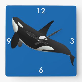 Killer Whale, Orcinus Orca Square Wall Clock
