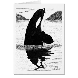 Killer Whale, Pen and Ink Card