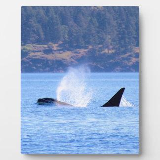 Killer Whale Plaque