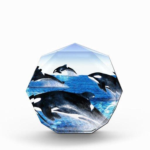 Killer Whale Pod Awards