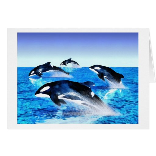 Killer Whale Pod Greeting Card