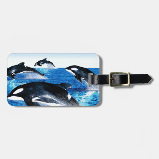 Killer Whale Pod Luggage Tag