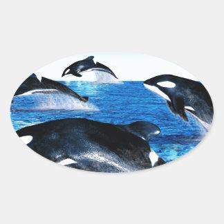 Killer Whale Pod Oval Sticker