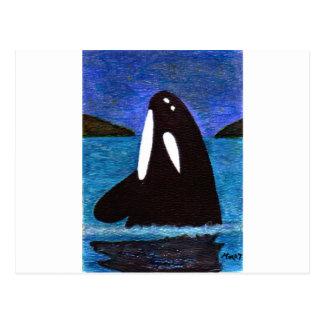 killer whale postcard