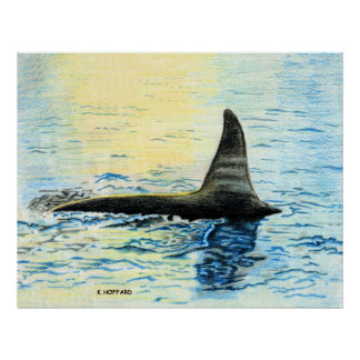 """""""Killer Whale"""" Posters"""