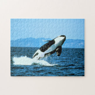 Killer Whale Jigsaw Puzzle