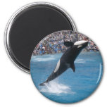 Killer Whale Refrigerator Magnet