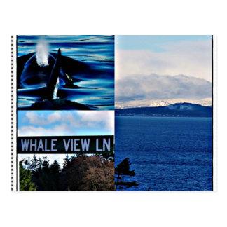 Killer Whale Scenic Mountain View Islands Postcard