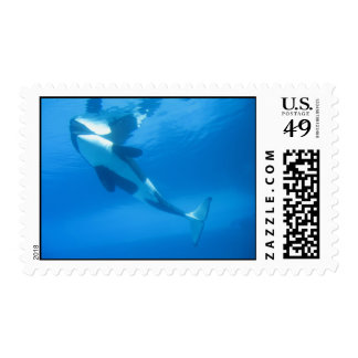 killer whale stamp