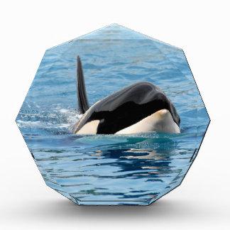 Killer whale swimming acrylic award