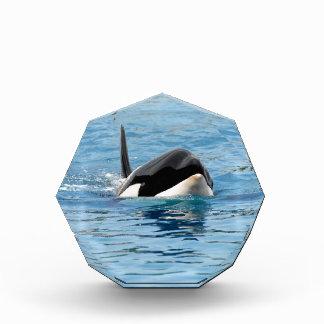 Killer whale swimming award
