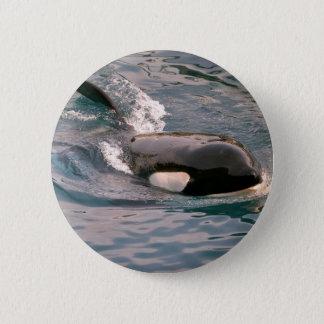 Killer whale swimming button