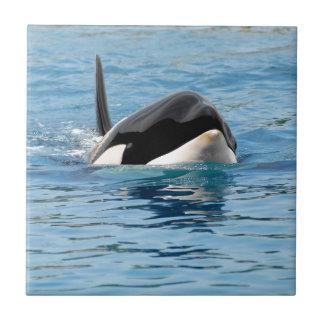 Killer whale swimming ceramic tile