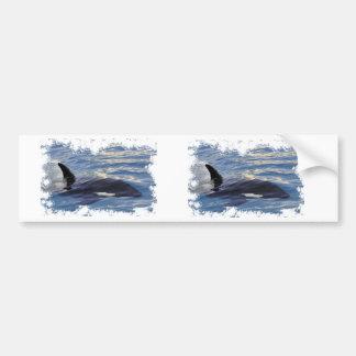 Killer whale swimming fast car bumper sticker