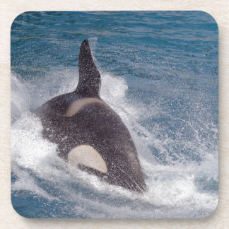 Killer whale swimming fast drink coaster