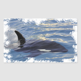 Killer whale swimming fast rectangular sticker
