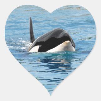 Killer whale swimming heart sticker