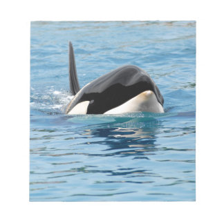 Killer whale swimming scratch pad