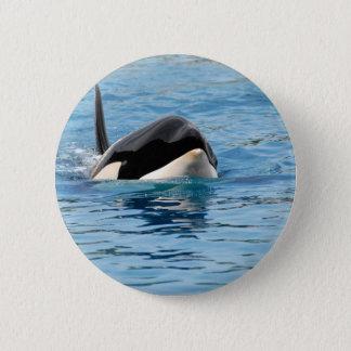 Killer whale swimming pinback button