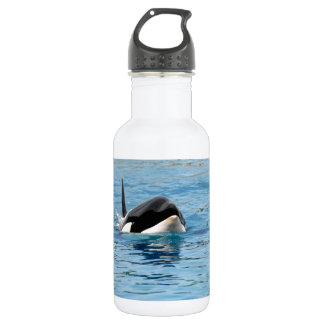 Killer whale swimming stainless steel water bottle