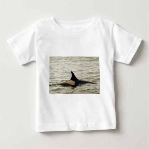Killer whale tee shirts