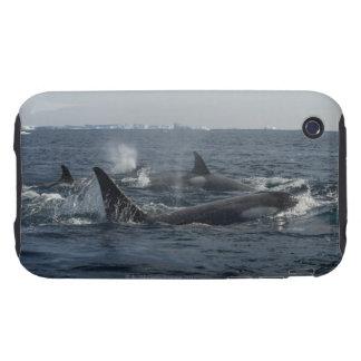 killer whale tough iPhone 3 cover